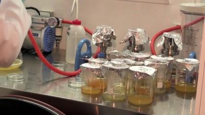 RİZE -Marmara'da 12, Karadeniz'de 7 balık türünde mikroplastik tüketimi tespit edildi
