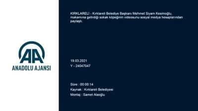 KIRKLARELİ - Belediye Başkanı Kesimoğlu'nun makamına aldığı sokak köpeğinin videosu beğeni topladı