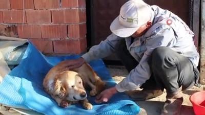 agri kesici -  Köpeğinin vurulduğunu veterinere götürünce anladı