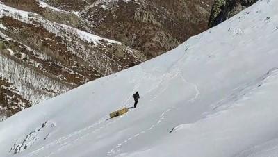 BİNGÖL - Ekipler karlı dağlara yaban hayvanları için 36 ton yem bıraktı