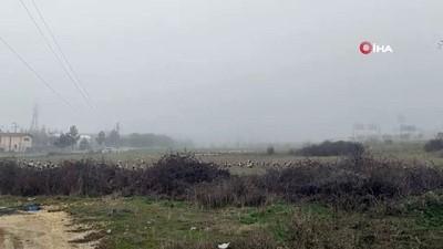 Bilecik'te leyleklerin sis altında göçü görsel şölen sundu
