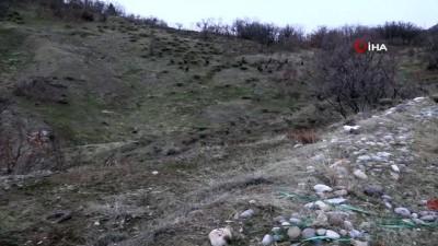 Tunceli'de sürü halinde yola inen domuz sürüsü görüntülendi