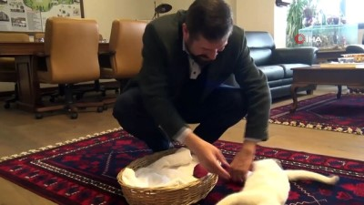 makam koltugu -  'Pamuk' belediyenin maskotu oldu
