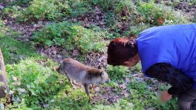 cesar -  Milli Park'ta karşılaştığı tilkiyi eliyle besledi