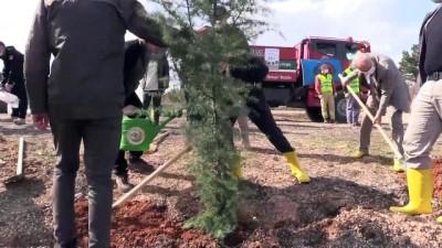 Trafik kazası sonrası yanan ormanlık alana 2 bin karaçam ve sedir fidanı ekildi