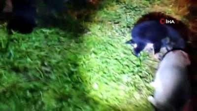 yavru kopekler -  Yaralı yavru köpekler telef olmaktan kurtarıldı
