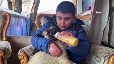 yavru kopekler -  Annesiz kalan yavru köpekler Ağrılı çocukların sevgisiyle hayata tutundu