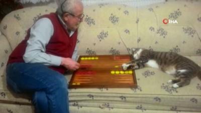 Emekli çiftin en büyük eğlencesi tavlacı kedileri
