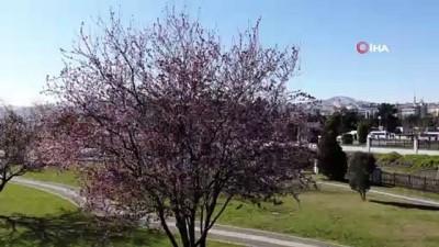 bahar havasi -  Samsun merkezde bahar, kırsalda kış