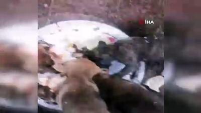 Soğukta aç kalan sahipsiz yavru köpekleri böyle besledi