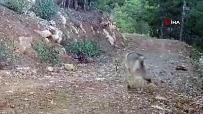 Burdur'da doğal yaşam fotokapanda
