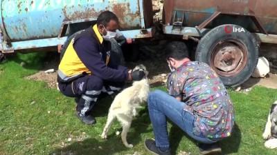 Engelli köpeğe Adıyaman Belediyesi sahip çıktı