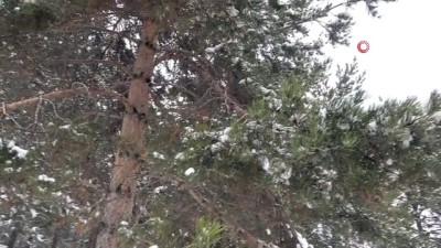 kis mevsimi -  Ağrı'da ağaçların oluşturduğu kar manzarası göz kamaştırdı