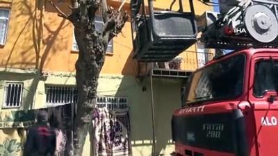 Ağaçta iki gündür aç ve susuz kalan kedi kurtarıldı