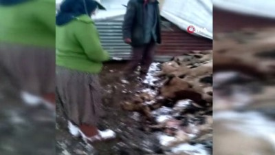 Koyun kuzu izdihamında 82 hayvan telef oldu