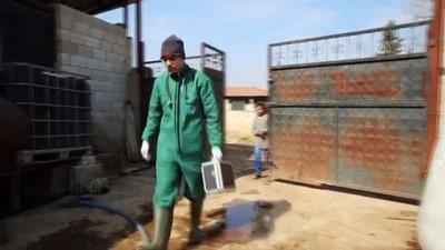 hanli - HATAY - Beslenme güçlüğü çektiği için ameliyat edilen ineğin karnından 15 kilo halat çıktı