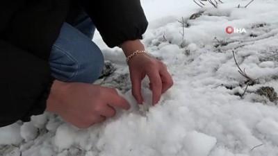 Mart ayında kardelenler beyaz örtü altında