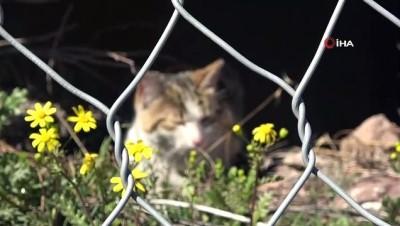 - Tel örgülerde mahsur kalan kedi kurtarıldı