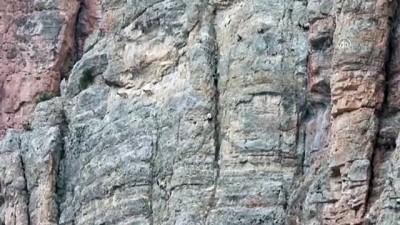 GÜMÜŞHANE - Yaban keçilerinin tırmanma hünerleri kameraya yansıdı