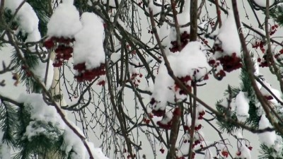 kar temizleme - KARS - İlkbaharda etkili olan kar yağışı Doğu Anadolu'da hayatı olumsuz etkiledi