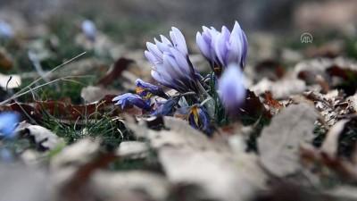 TUNCELİ - Sarp dağların arasındaki Pülümür Vadisi doğasıyla ziyaretçilerini cezbediyor