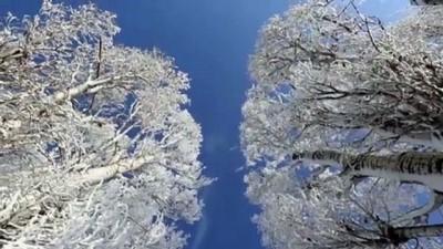 yavru kopekler - AĞRI - Dondurucu soğuklar martta da etkisini sürdürüyor