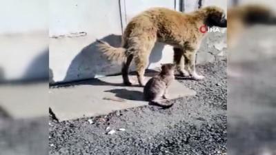 Ağrı'da kedi ve köpeğin gülümseten dostluğu