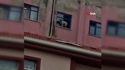 """kopek -  Binanın 9'uncu katındaki köpeğe seslenen vatandaş: """"Ne derdin var intihar etme"""""""