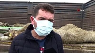 Karaman'da 20 koyunun telef olduğu sürüdeki 579 küçükbaş hayvanı köylüler kurtardı