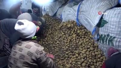 TMO Patates alımlarına başladı