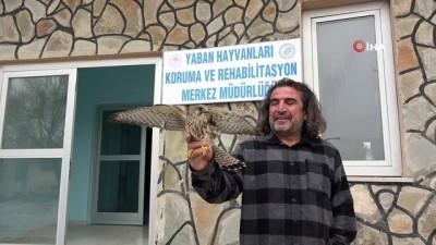 Van YYÜ'ye 20 hasta yaban hayvanı getirilerek tedavi altına alındı