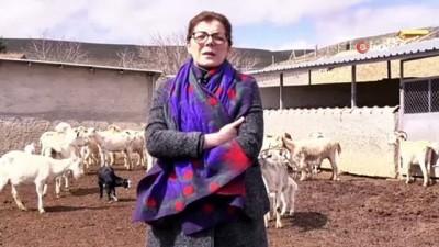 18 Nisan'ın Dünya Çoban Günü ilan edilmesi için çalışma başlatıldı