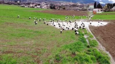 yagan -  Baharı bekleyen leyleklere, Muhtar'dan balık servisi
