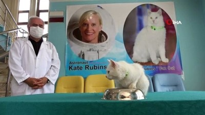 Astronot Kate Rubins'e Van kedisi hediye edildi