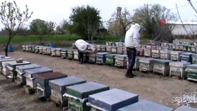 Manyas'ta arılar zehirli kimyasal atık su yüzünden telef oldu