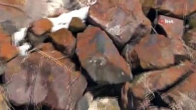 Nadir görülen beyaz gelincik Ardahan'da görüntülendi