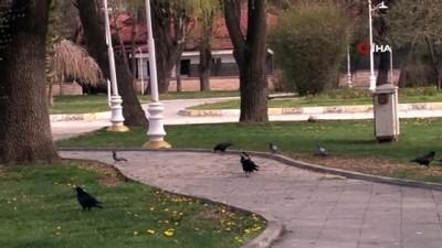 Erzincan'da hafta içi yoğunluk olan caddeler kısıtlamayla sessizliğe büründü