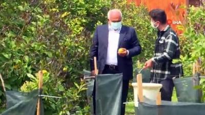 Ektikleri alın terinin meyvelerini e ticaretle topluyorlar
