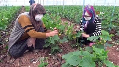 İç Anadolu'nun Çukurova'sında devlet desteğiyle üretim artarak sürüyor