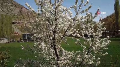 Çiçek açan ağaçlar renkli görüntüler oluşturdu