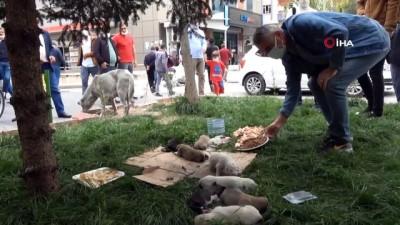 Siirt'te caddede doğum yapan köpeğe vatandaşlar sahip çıktı