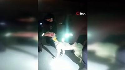 Boynuna kelepçe ile teneke bağlanan köpeğin yardımına bekçiler koştu