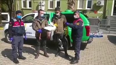 hanli -  Jandarmanın bulduğu yaralı leylek emin ellerde