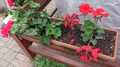 hirsiz -  Alanya'da restoran önünden çiçek hırsızlığı kamerada