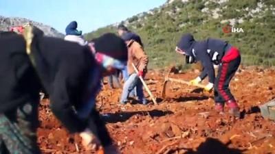 lyon -  Isparta'da 36 milyon fidan toprakla buluşturuldu