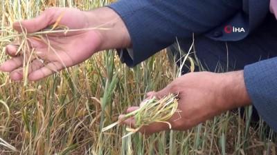 lyon -  Mardin'de çiftçilerin kuraklık çığlığı