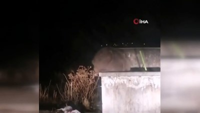 Sarıkamış'ta boz ayılar ilçe merkezine indi, konteynerleri böyle karıştırdılar
