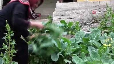 Doğu Karadeniz insanının vazgeçilmezi 'kara lahana' iftarların da gözdesi