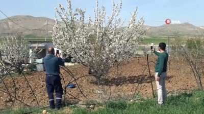 uttu -  Gercüş'te çiçek açan kiraz bahçeleri gelinliği andırdı