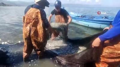 İznik Gölü'nde gümüş balığı rekoru: 1 günde 15 ton